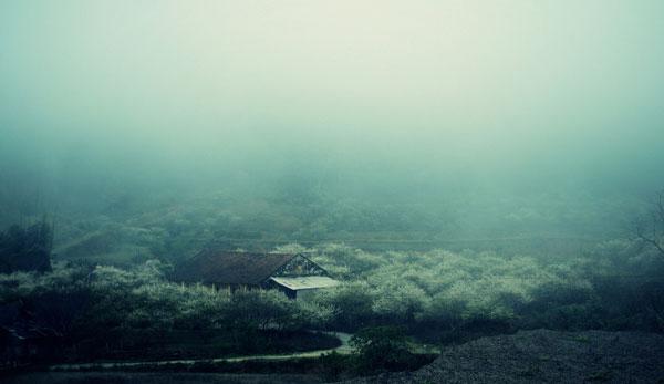 hoamantrang-mocchau-343